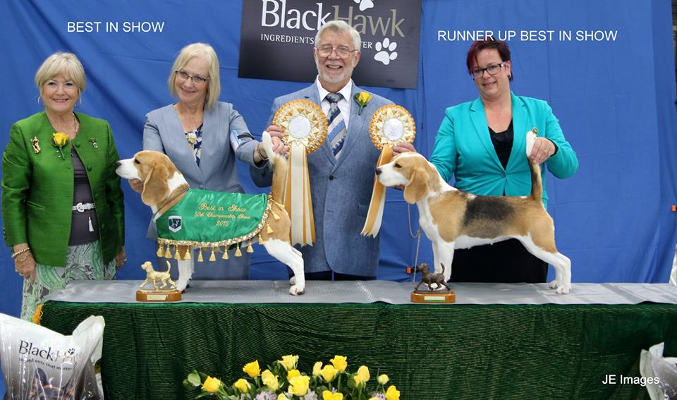 BIS and RBIS 50th Championship Beagle Show