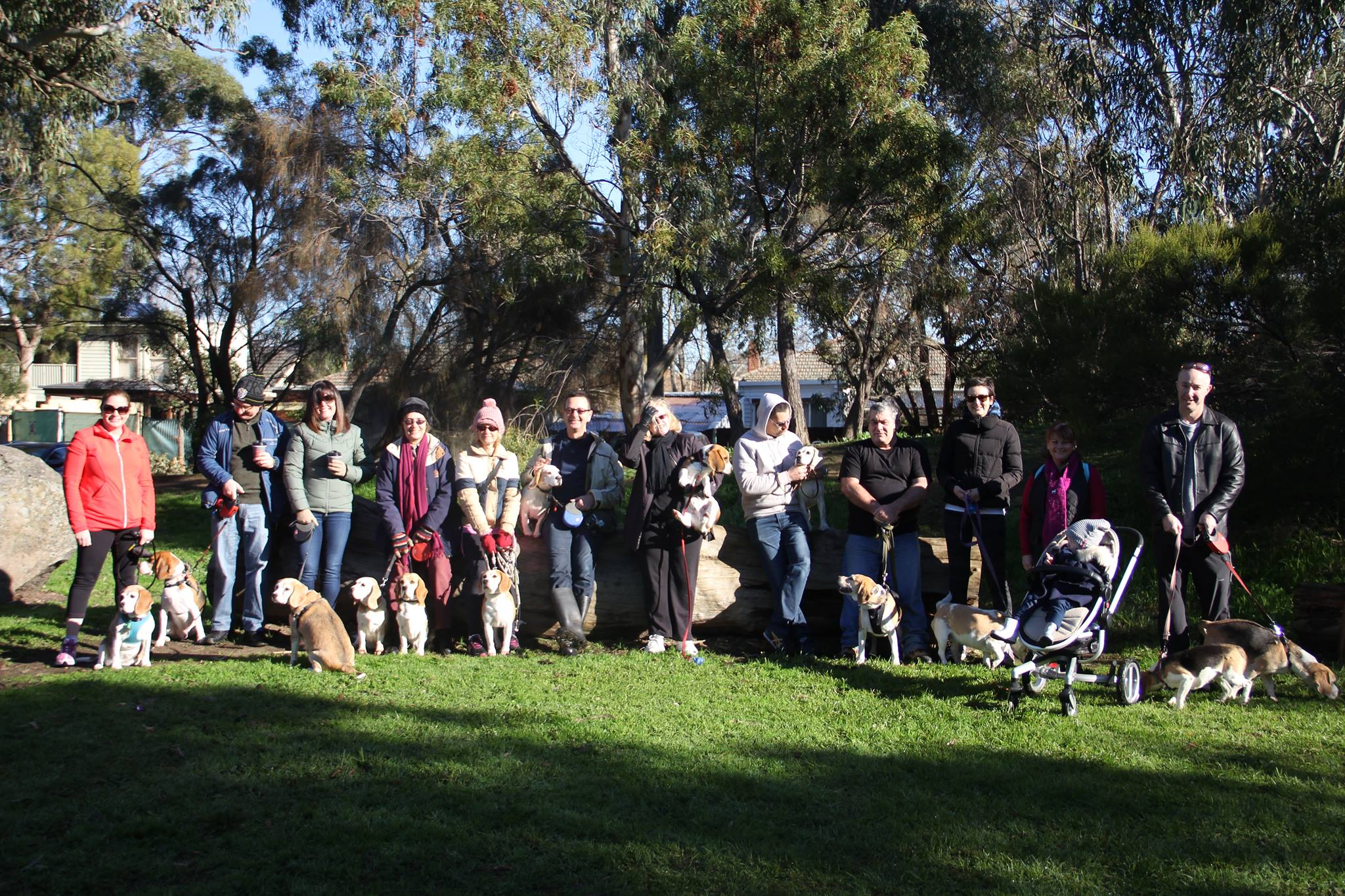 Beagles and owners at the park
