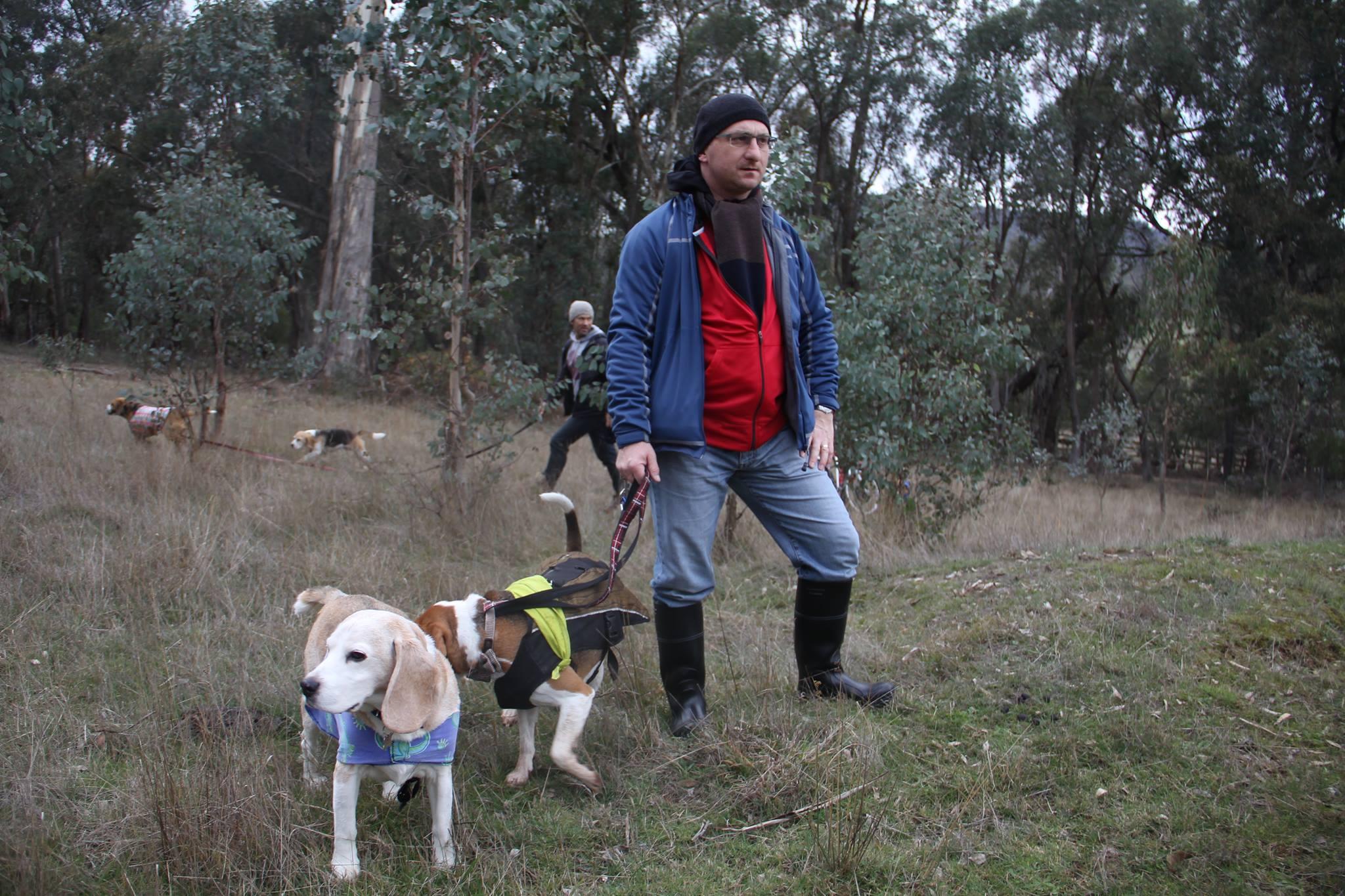 Beagle Scent Hunt