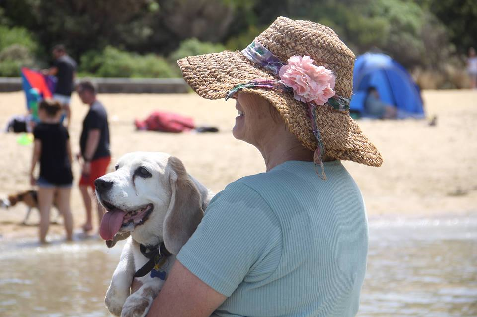 beagle, dog beach, water, melbourne, mentone, victoria, australia, lady, hat, tongue, hot, summer