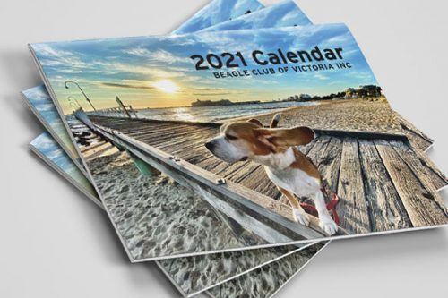 Stack of Beagle Club of Victoria 2021 calendars for sale